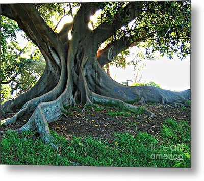 A Poem As Lovely As A Tree Metal Print by Leanne Seymour