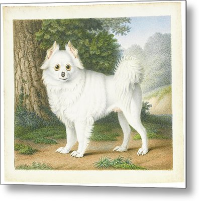 A Pomeranian In A Landscape Metal Print by MotionAge Designs
