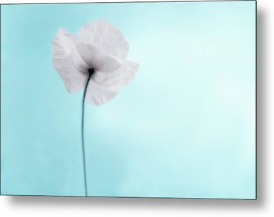 A Poppy Against A Cool Blue Background Metal Print by Alexandre Fundone