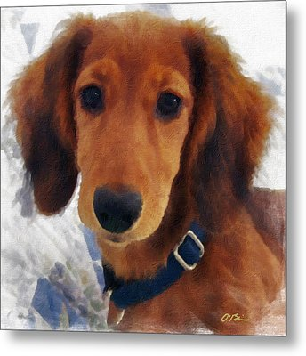 A Puppy Called Redford Metal Print by Claudia O'Brien