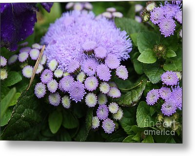 Metal Print featuring the photograph A Purple Morning by Edward R Wisell