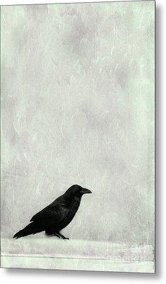A Raven Metal Print by Priska Wettstein