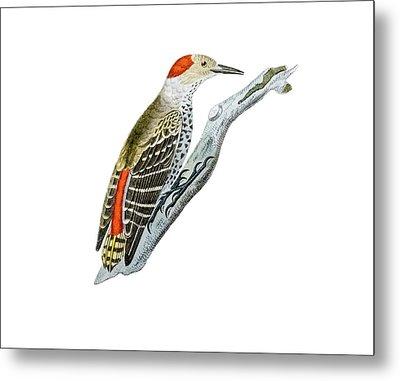 A Red Headed Woodpecker 1 Metal Print by Douglas Barnett