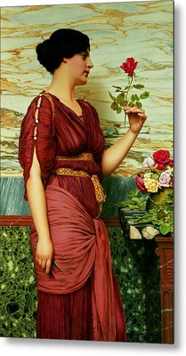 A Red Rose   Metal Print by John William Godward