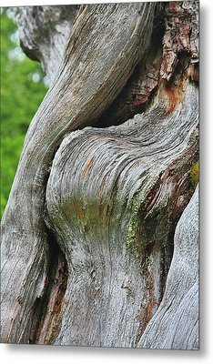 A Remarkable Tree - Duncan Western Red Cedar Olympic National Park Wa Metal Print by Christine Till