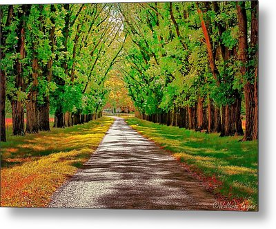 A Road Through Autumn Metal Print by Wallaroo Images