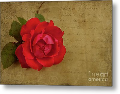 A Rose By Any Other Name Metal Print by Lena Auxier