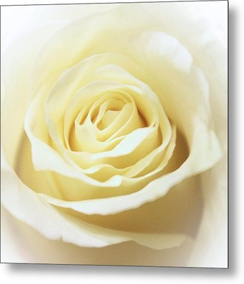 A Rose... Metal Print
