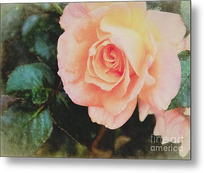 A Rose For Kathleen Metal Print