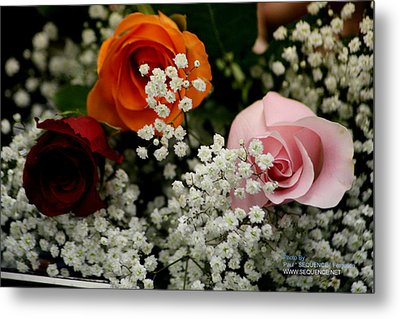 A Rose To You Metal Print by Paul SEQUENCE Ferguson             sequence dot net