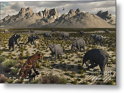 A Sabre-toothed Tiger Stalks A Herd Metal Print by Mark Stevenson