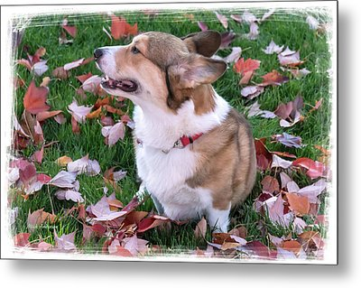 A Scent In The Autumn Air Metal Print by Mick Anderson