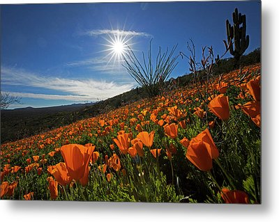 A Sea Of Poppies Metal Print