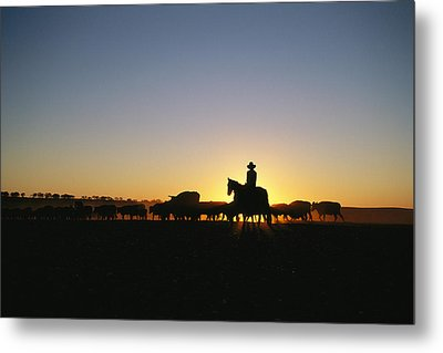 A Silhouetted Australian Cattle Rancher Metal Print