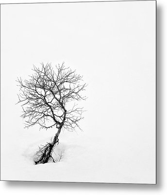 A Simple Tree Metal Print by Dave Bowman