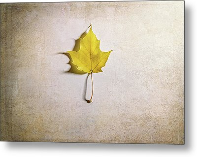 A Single Yellow Maple Leaf Metal Print by Scott Norris