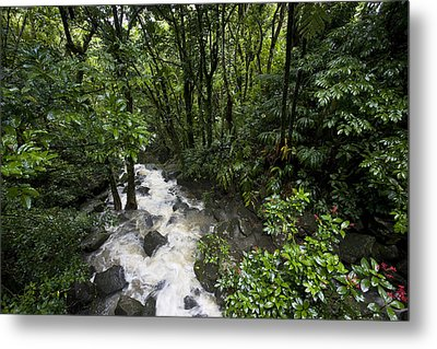 A Small River Flows Through A Dense Metal Print by Hannele Lahti