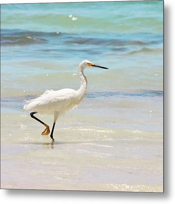 A Snowy Egret (egretta Thula) At Mahoe Metal Print by John Edwards