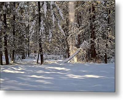 Metal Print featuring the photograph A Soft Sound In The Forest by Tom Vaughan