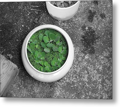 A Spalsh Of Green In A World Of Grey Metal Print by Michael Palmer