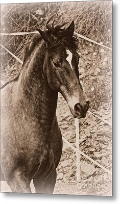 A Spanish Noble Metal Print by Clare Bevan