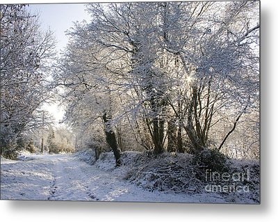 A Sparkling Winter Day Metal Print by Sophie De Roumanie