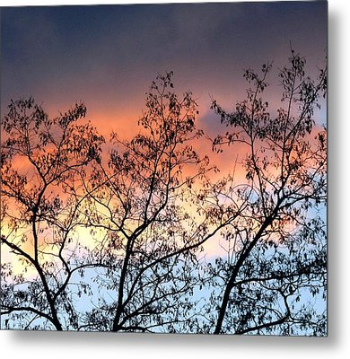 Metal Print featuring the photograph A Splendid Silhouette by Will Borden