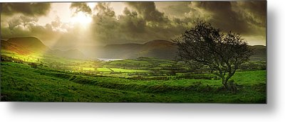 Metal Print featuring the photograph A Spot Of Sunshine by John Chivers
