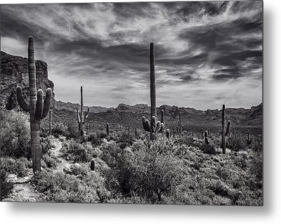 Metal Print featuring the photograph A Morning Hike In The Superstition In Black And White  by Saija Lehtonen