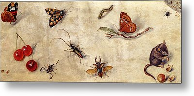 A Study Of Various Insects, Fruit And Animals Metal Print by Jan Van Kessel the Elder