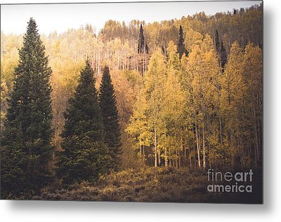 Metal Print featuring the photograph A Subtle Glow by The Forests Edge Photography - Diane Sandoval
