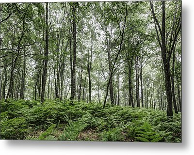 A Summer Day In The Forest Metal Print by Marc Garrido