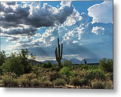 Metal Print featuring the photograph A Summer Day In The Sonoran  by Saija Lehtonen
