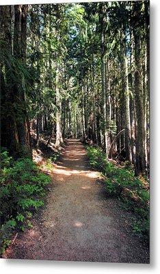 A Sun Lit Trail Through The Forest Metal Print