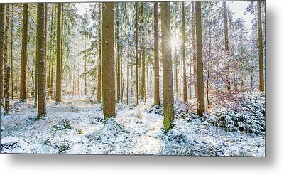 Metal Print featuring the photograph A Sunny Day In The Winter Forest by Hannes Cmarits