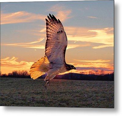 A Sunset Flight Metal Print