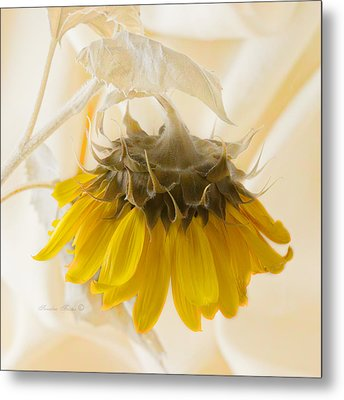 A Suspended Sunflower Metal Print