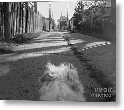 A Terriers Perspective Metal Print by Reb Frost