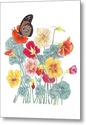 A Tethered Butterfly Metal Print by Stanza Widen