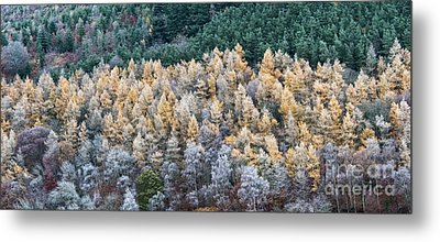 A Touch Of Frost Metal Print by Tim Gainey