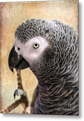 A Touch Of Grey 11 Metal Print by Betty LaRue