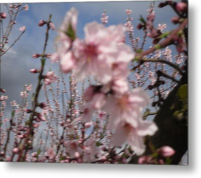 A Touch Of Pink 4 Metal Print by Susanne Awbrey