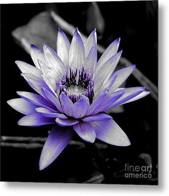 A Touch Of Purple Metal Print