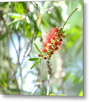 Metal Print featuring the photograph A Touch Of Spring by Laura DAddona