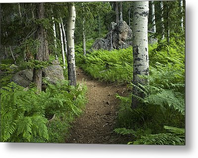 A Tranquil Path  Metal Print