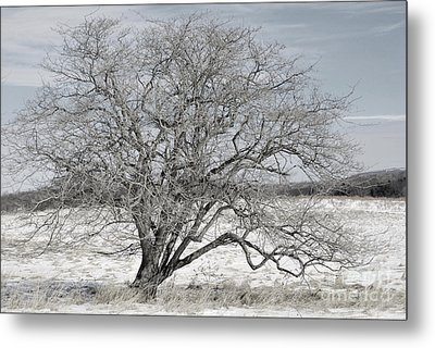 A Tree In Canaan Metal Print by Randy Bodkins
