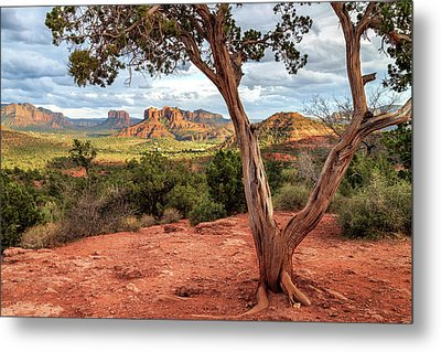 A Tree In Sedona Metal Print by James Eddy