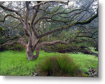 A Tree In The Park  Metal Print by Catherine Lau