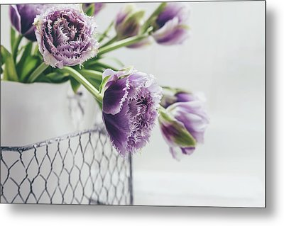 Metal Print featuring the photograph A Tulip Moment by Kim Hojnacki
