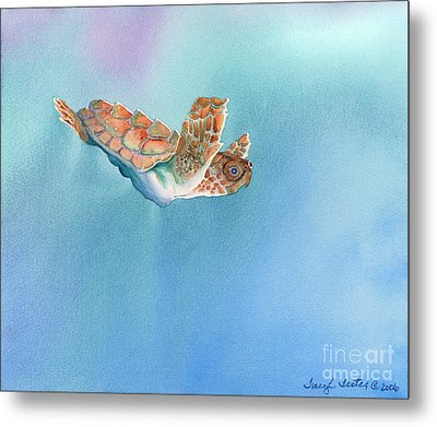 A Turtles Flight Metal Print by Tracy L Teeter